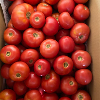 加工用麗月6キロ 1(野菜)