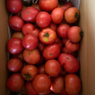 麗月お得箱6キロ 一(野菜)