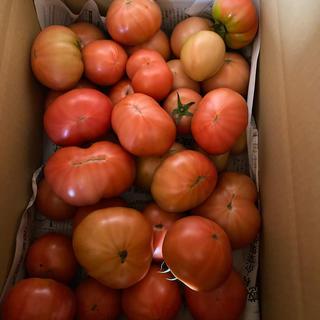 麗月お得箱6キロ 二(野菜)