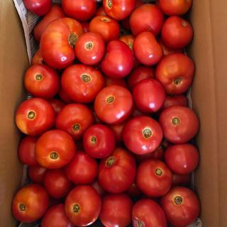 麗月加工用6キロ ラスト(野菜)