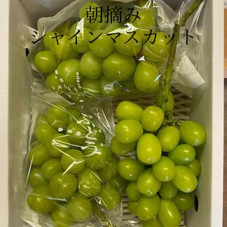★シャインマスカット★〜山梨県(フルーツ)