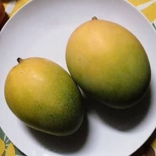 特価!送料込!絶品の高級マンゴー!沖縄産 完熟キーツマンゴー(フルーツ)