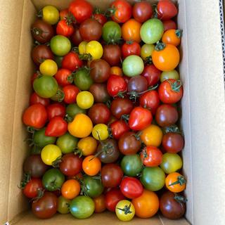 カラフルミニトマト2キロ 二(野菜)