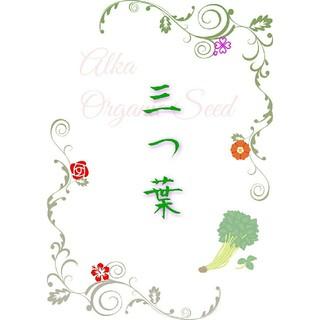 三つ葉の種 固定種 野菜の種 ハーブの種 家庭菜園 水耕栽培 有機種子(野菜)
