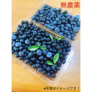 無農薬生ブルーベリー500g (フルーツ)