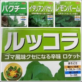 【ハーブの種】野菜の種 4種類  家庭菜園  プランター(野菜)