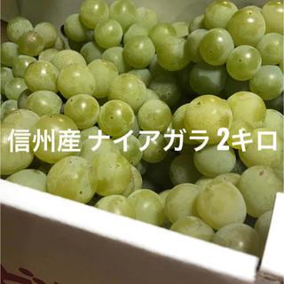 信州産 葡萄 ナイアガラ  2kg (フルーツ)