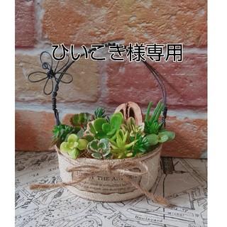 手付きリメ缶&カット苗セット(その他)