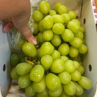 本日のみ‼️新鮮なうちに‼️シャインマスカット❤️果物❤️大ぶり❤️訳あり品。(フルーツ)