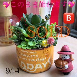 ❤︎専用❤︎このまま飾れる❤︎イエロー缶♪10/3(土)更新(その他)