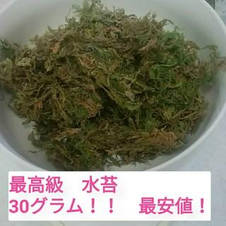 最高品質 水苔 30グラム 水ごけ(その他)