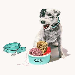 ティファニー(Tiffany & Co.)のティファニー 犬用 首輪 リード セット(犬)