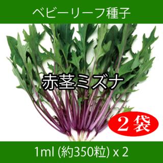 ベビーリーフ種子 B-20 赤茎ミズナ 1ml 約350粒 x 2袋(野菜)