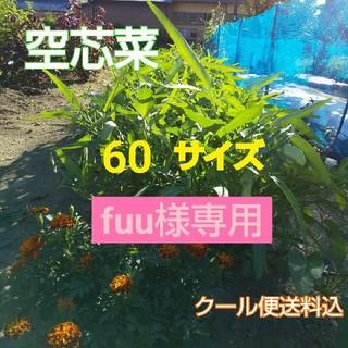 【空芯菜増量セット】新鮮野菜☆農薬不使用(野菜)