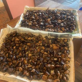 黒にんにく 青森県産福地ホワイト訳ありバラ700グラム 黒ニンニク(野菜)