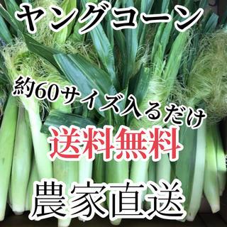 スージー様専用(野菜)