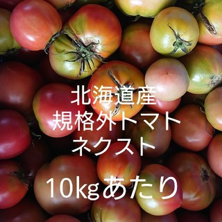 北海道産 規格外 ネクスト トマト10㎏くらい(野菜)
