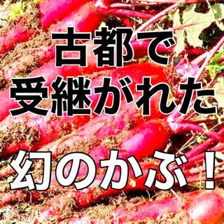 【幻の伝統野菜‼️】飛鳥あかねかぶの種 約30粒 赤カブ 野菜 家庭菜園 タネ(野菜)