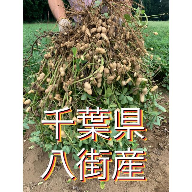 9月19日収穫 千葉県八街産おおまさり 1キロ 食品/飲料/酒の食品(野菜)の商品写真