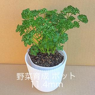 パセリポット11  ( 11.4cm )   / テーブル 11.4cmポット(野菜)