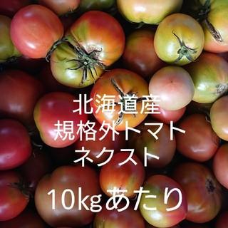 北海道産 規格外トマト ネクスト 10㎏くらい(野菜)