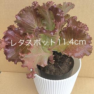 レタスポット11   野菜ポット育成     略称: POT11(野菜)
