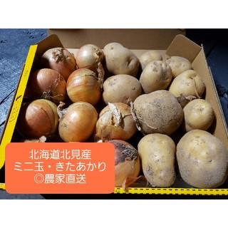 北海道 北見産 新 じゃがいも キタアカリ ミニ玉セット ◎農家直送(野菜)