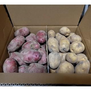 ●北海道 北見産 新 じゃがいも レッドムーン キタアカリ お得(野菜)