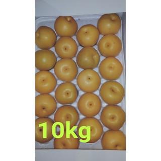 熊本県産秋月梨10kg(フルーツ)