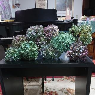 秋紫陽花です。枝つき 10本  ②(ドライフラワー)