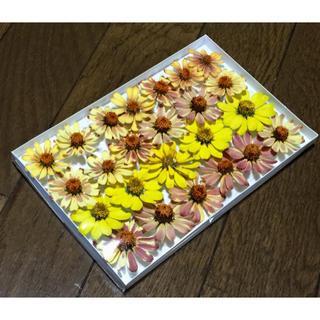 お花屋さんが作った大人色ジニアのドライフラワー   13(ドライフラワー)