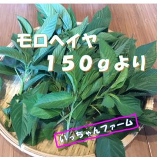 モロヘイヤ&つるむらさき ネバネバ野菜セット コンパクトサイズにて(野菜)