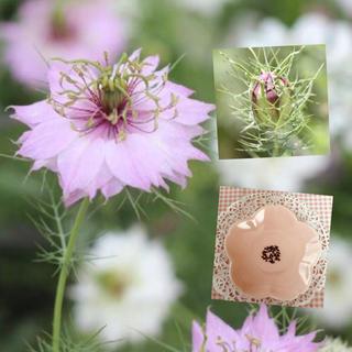 砂糖菓子のような可愛いさ♡『ニゲラローズ』花の種50粒(その他)