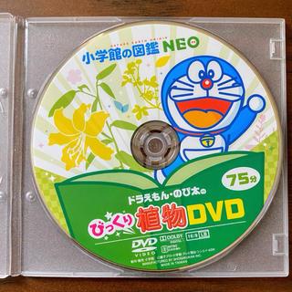 ショウガクカン(小学館)の小学館の図鑑NEO びっくり植物DVD(キッズ/ファミリー)