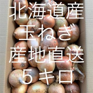 玉ねぎ 5キロ(野菜)