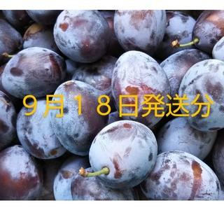 プルーン 約25個入り もぎたて生 秋田県横手市産(フルーツ)