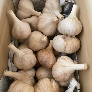 北海道産ニンニク 北海道在来種ピンクニンニク(野菜)