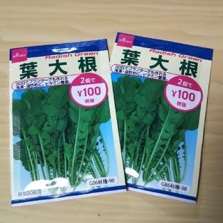 DAISO 葉大根の種 2袋【他の商品と同梱の場合100円で計算します】(野菜)
