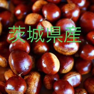 茨城県産 栗 2Lサイズ1.3キロ越え(野菜)