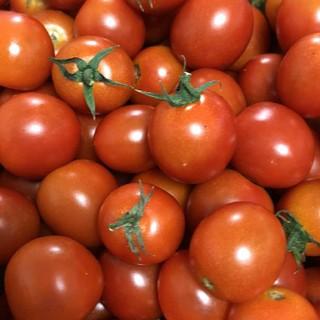 熊本県産 ミニトマト 1キロ(野菜)