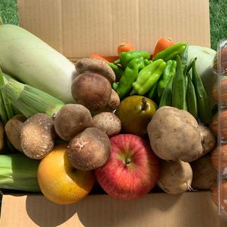 ★80サイズ★ 無農薬新鮮野菜果物セット 10種類(野菜)