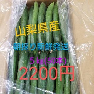 🥒🥒朝採り新鮮発送  きゅうり5㎏🥒🥒(野菜)
