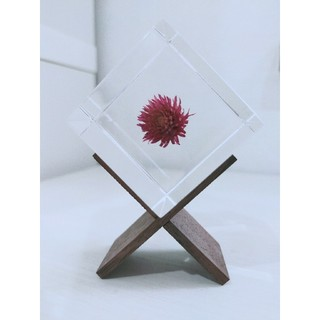 IDEE - sola cube センニチコウ 専用スタンド付き