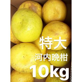 ponpon様 専用 愛媛 特大 宇和ゴールド 10Kg   河内晩柑(フルーツ)