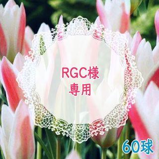 RGC様専用*60球♣ 原種チューリップ レディージェーン レッド系 白×赤 (その他)
