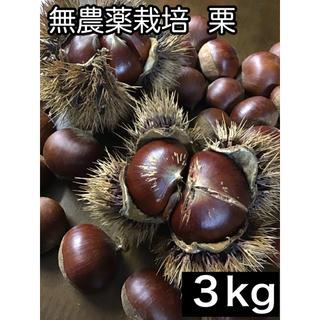 栗 無農薬栽培 3kg(フルーツ)