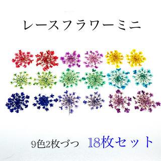 【18枚】レースフラワー ミニの押し花(ドライフラワー)