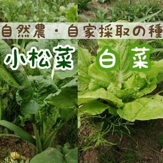 【令和2年収穫・自然農】小松菜&白菜の種 +おまけの種つき(野菜)