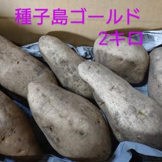 種子島ゴールド(野菜)
