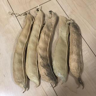 赤なた豆(野菜)